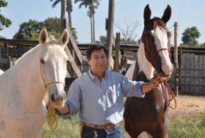 O Mangalarga Mineiro (à esq.) e o Mangalarga Paulista possuem origem genética do garanhão Alter Real doado por Dom João VI - Alcides Flavio Gatti de Oliveira (Nenê)